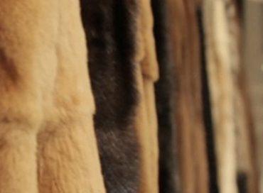 Custodia pellicce